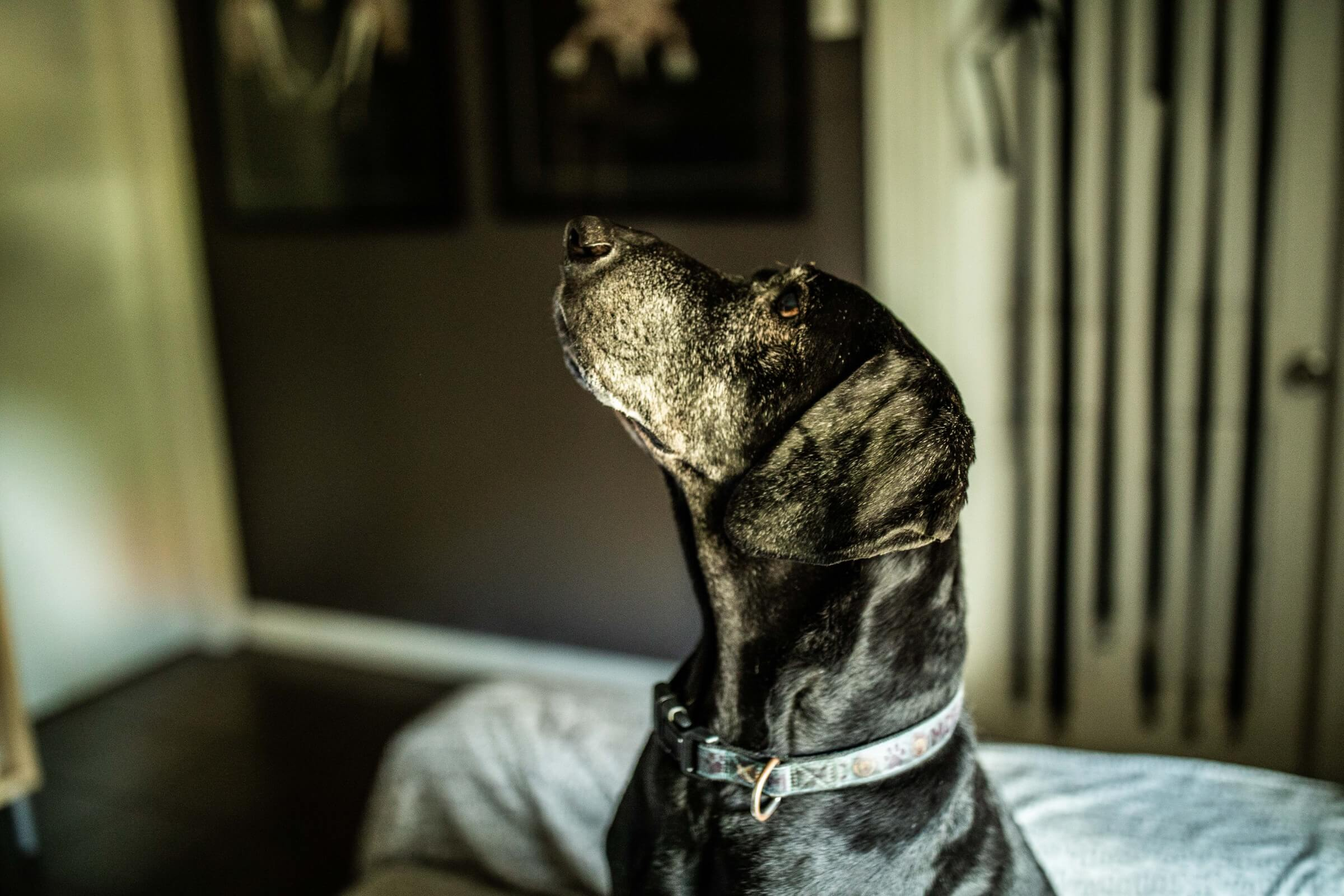 Dog Boarding Eastern Suburbs Sydney