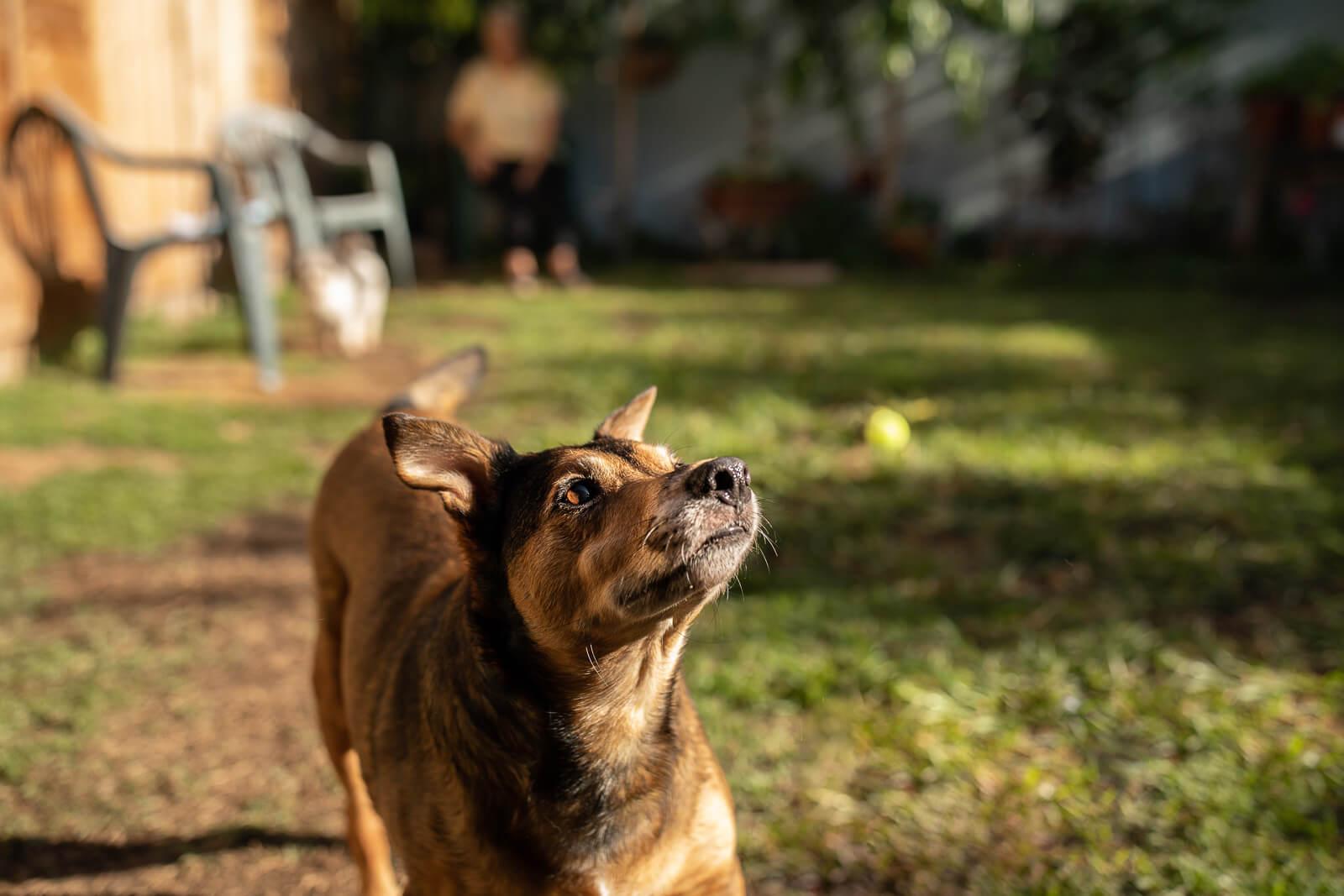 Dog Day Care Eastern Suburbs